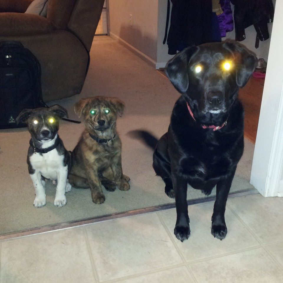 The dogs patiently waiting to be called to dinner.