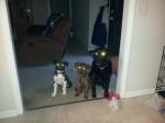Puppy Update March 25